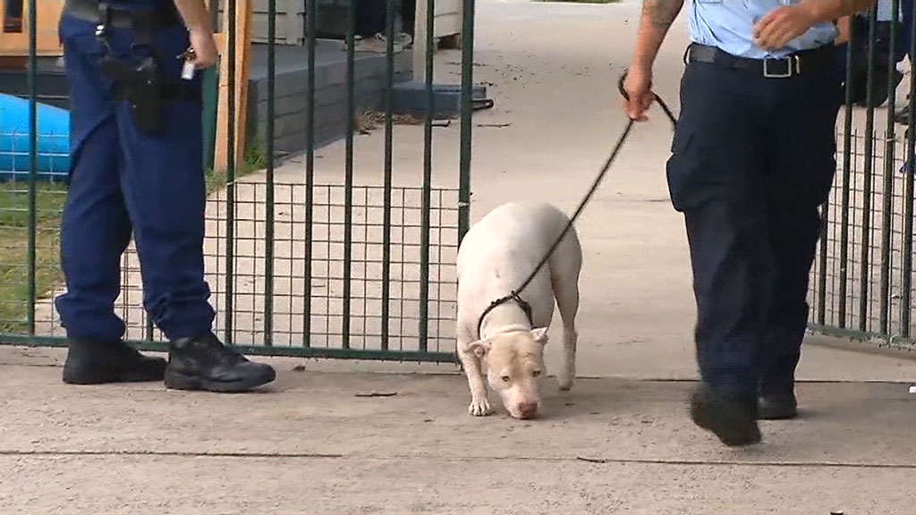 A man is recovering in hospital after dog attack