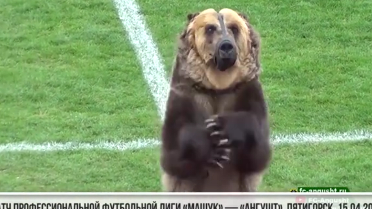 Russia under fire over football  bear stunt