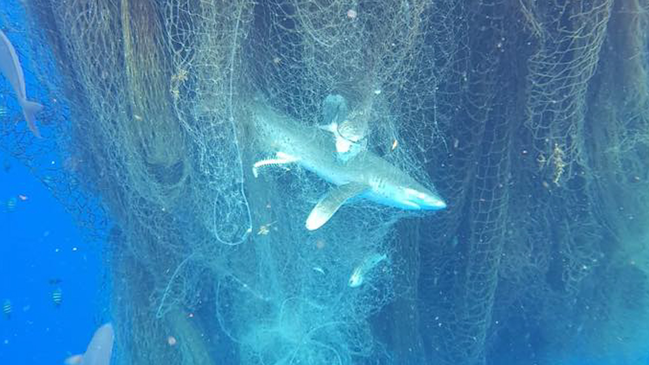 Deadly 'ghost net' found in the Caribbean Sea