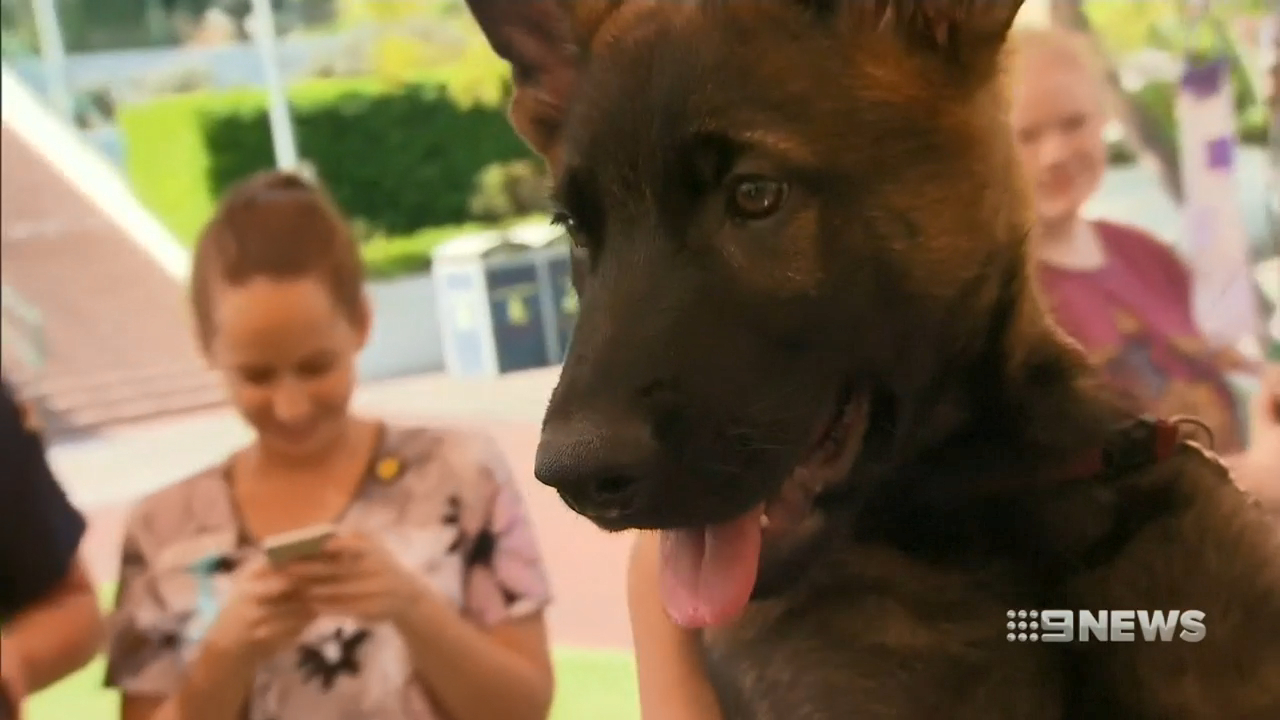 Sick kids name new squad of police puppies