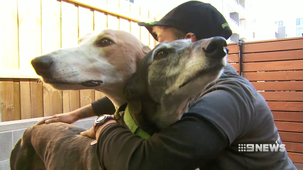 No more muzzles for greyhounds in Victoria