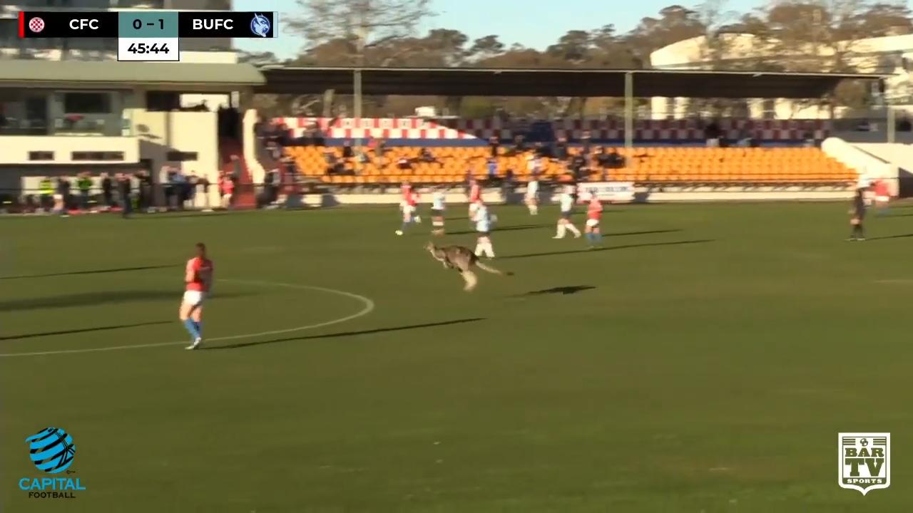 Kangaroo crashes football match