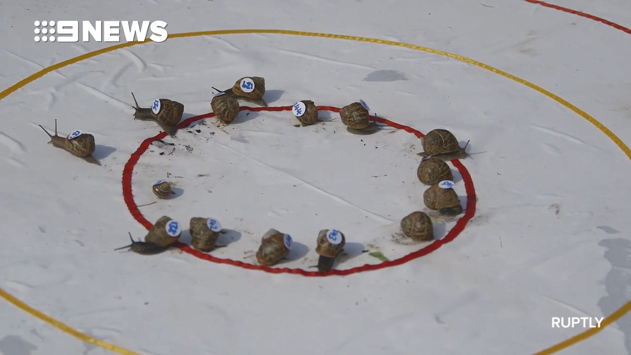 Ready, set, slow! Winner of 2018 Snail Racing Championship crowned
