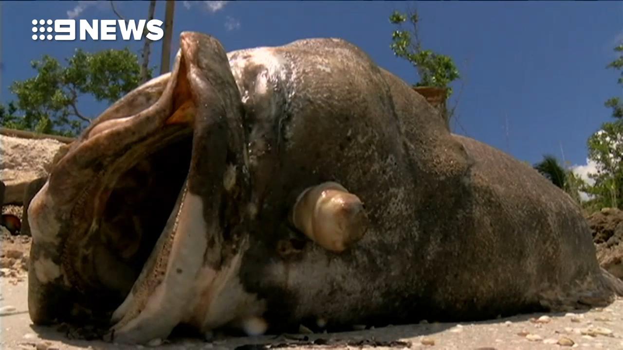 Dead fish litter Florida beaches