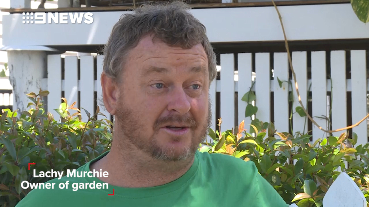 Mackay council rips up verge garden