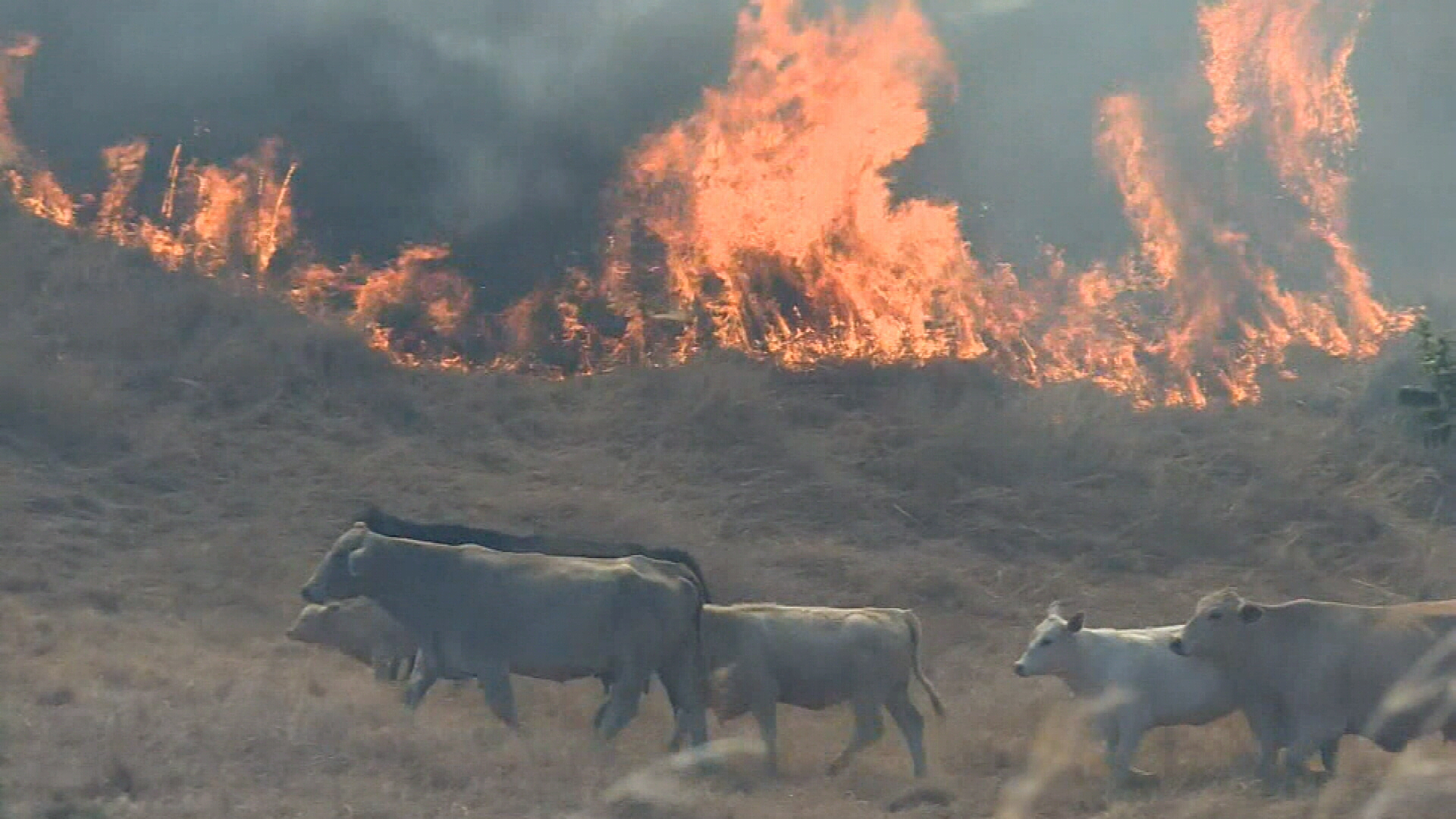 Fire crews battle Queensland blazes