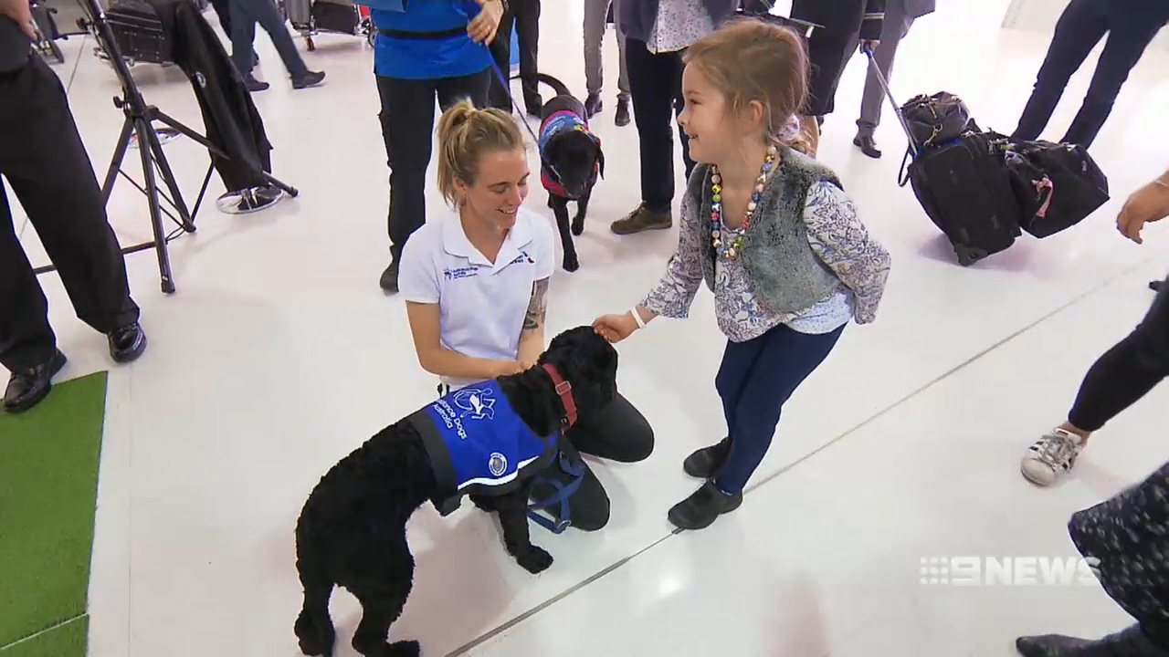 Sydney Airport launches airport assistance dogs program