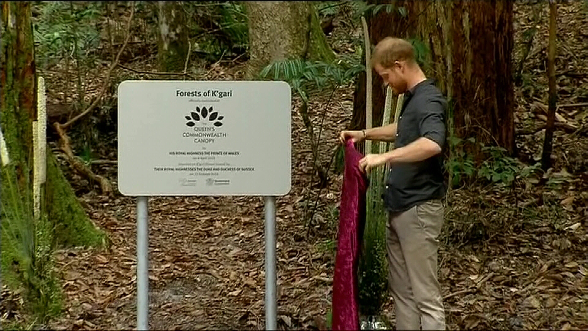 Prince Harry unveils the Queens Commonwealth Canopy