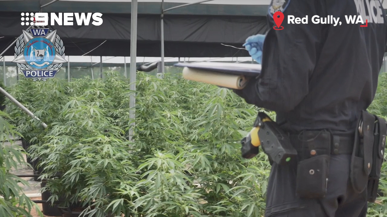 WA Police seize 7500 cannabis plants in bust