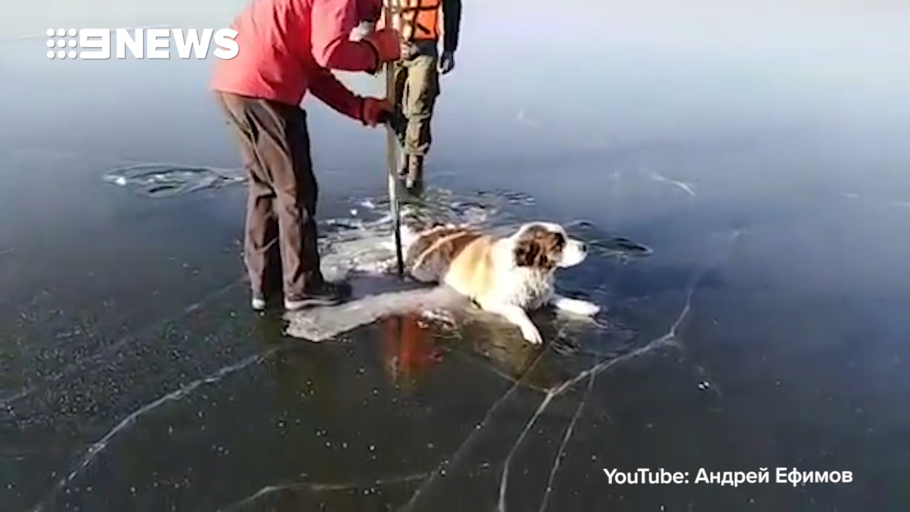 Dog rescued from iced lake