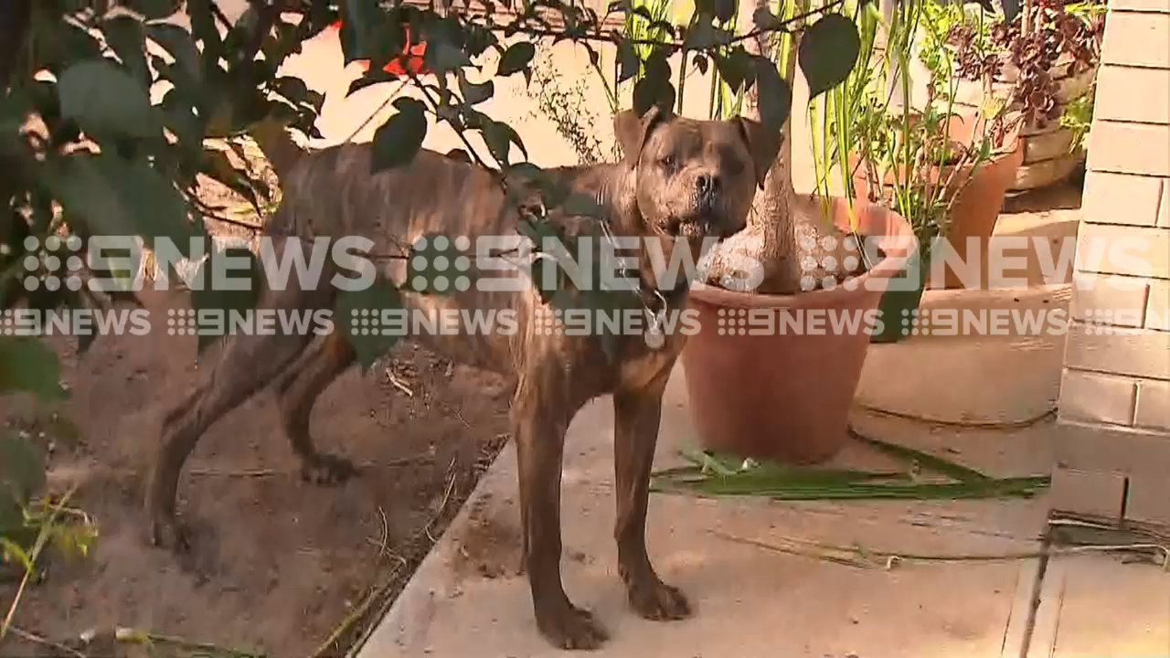 Woman mauled by own dog in Adelaide