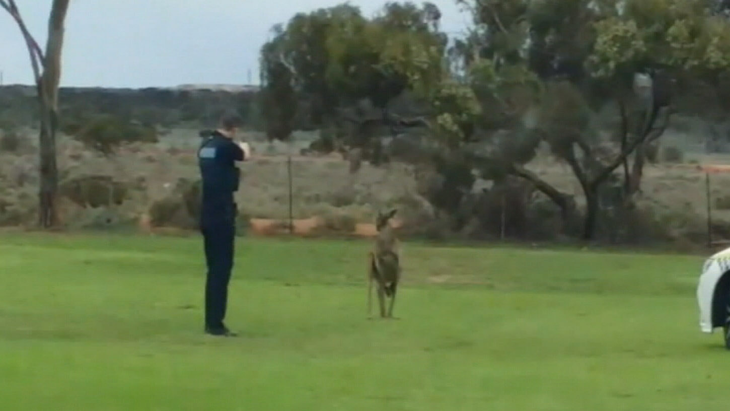 Police officer filmed opening fire on injured kangaroo