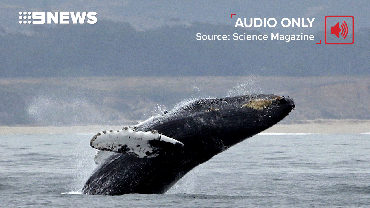Humpback whales change their songs in 'cultural revolution'