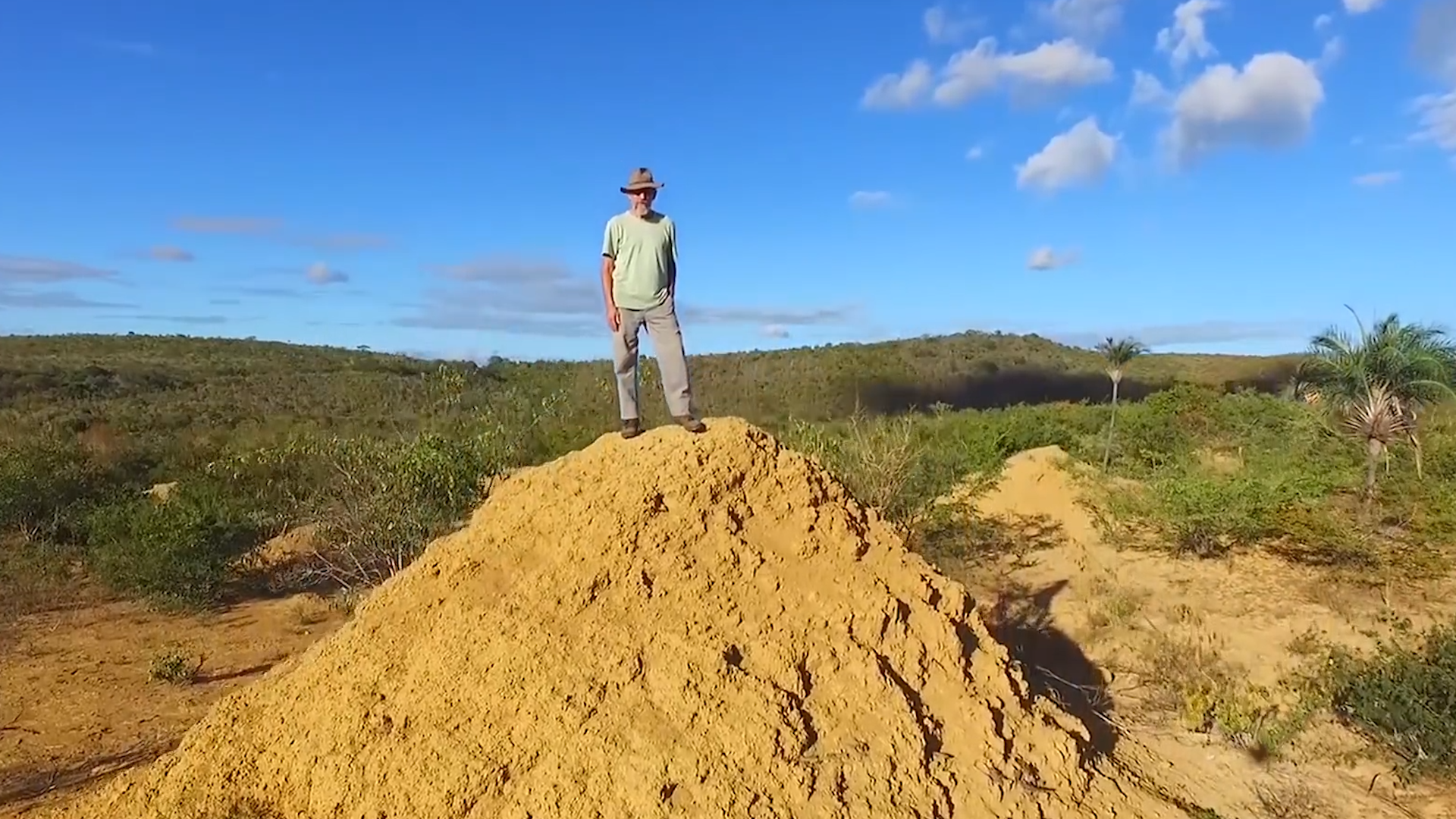 Termite mound the size of Britain found