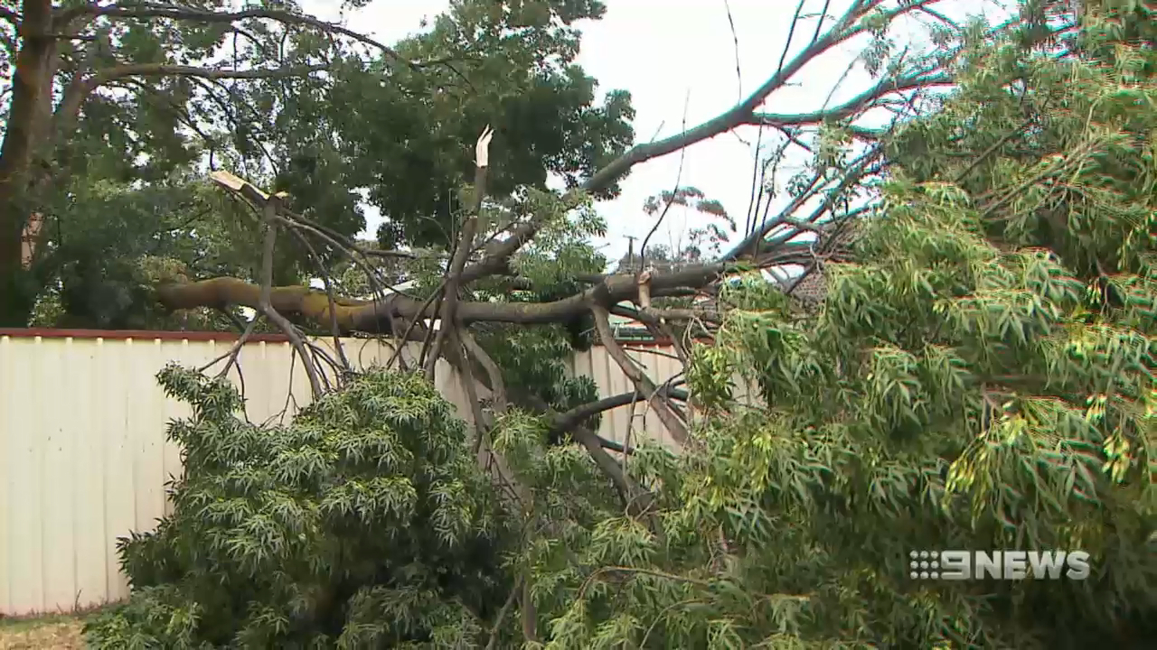 Spring storm wreaks havoc across South Australia