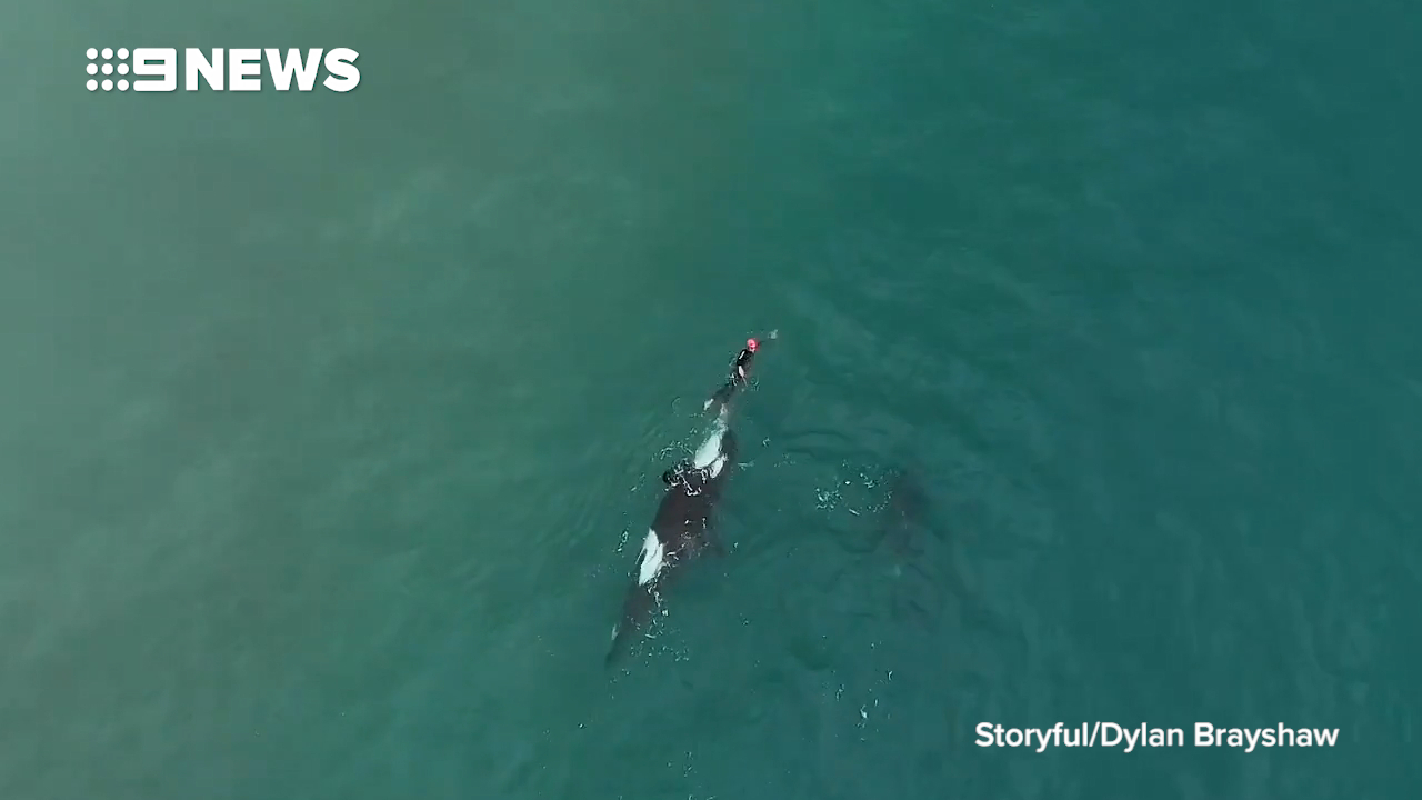 Drone footage captures woman's killer whale close encounter