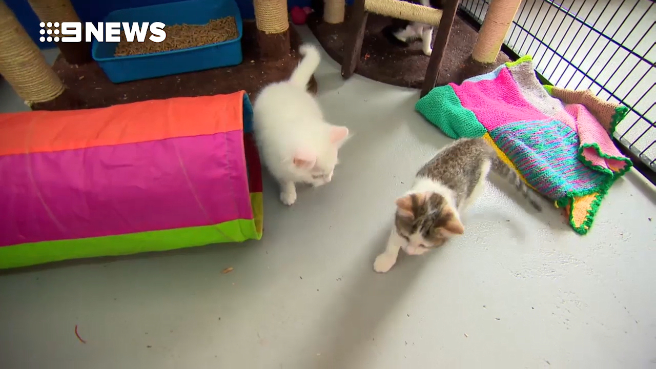 Cats and kittens up for adoption this Christmas