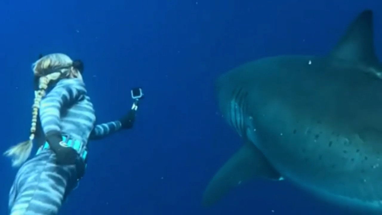 Woman who swam with Great White Shark in Hawaii