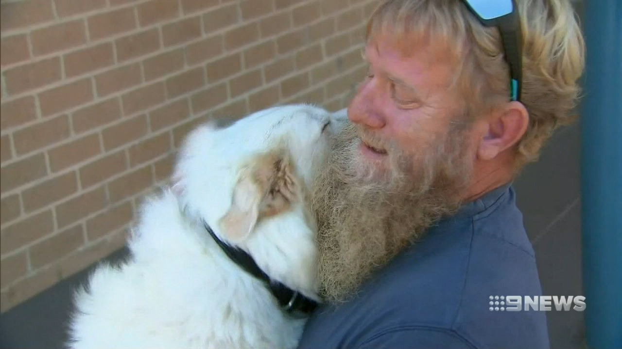 Tradie reunited with dog after ute stolen