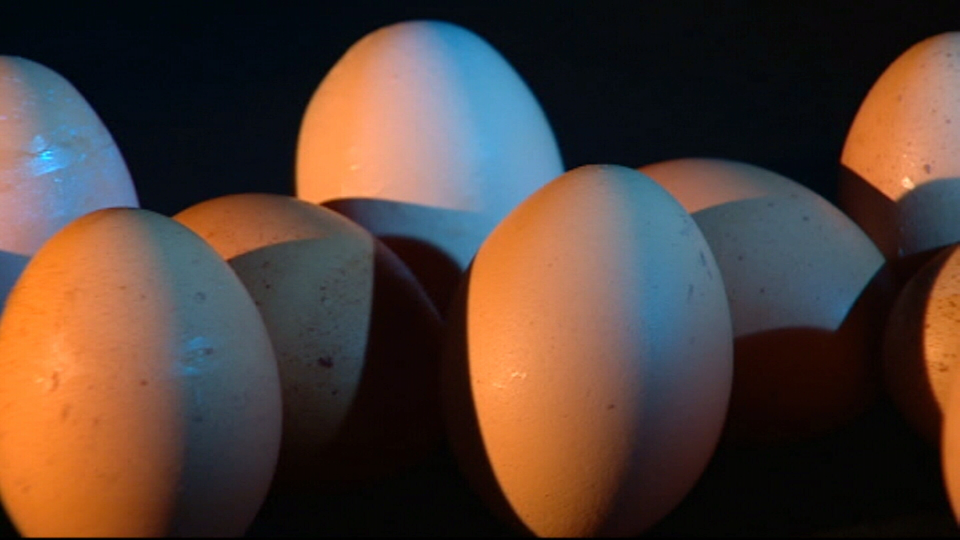 Eggs pulled from Australian supermarkets due to Salmonella fears