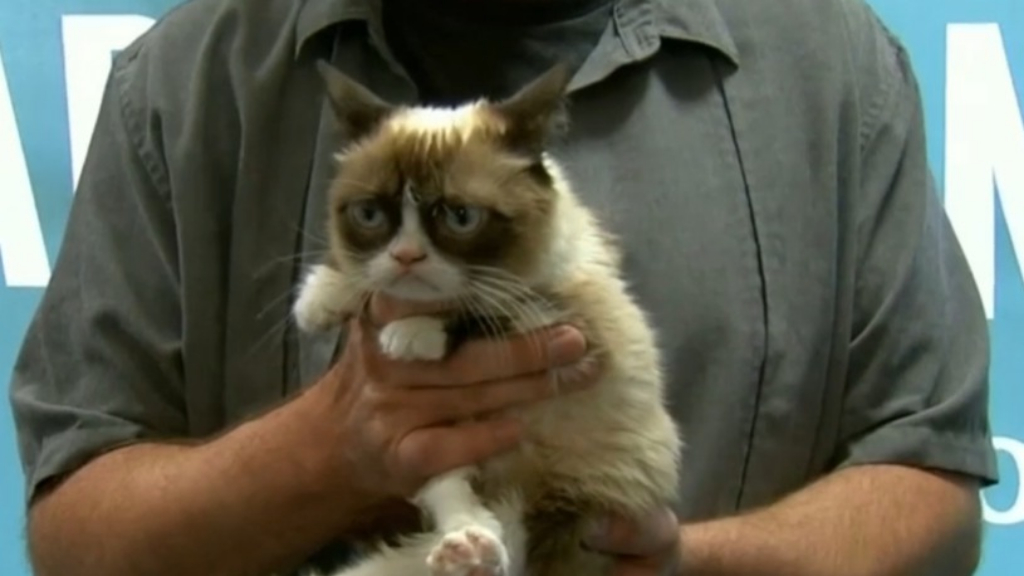 World famous grumpy cat dies