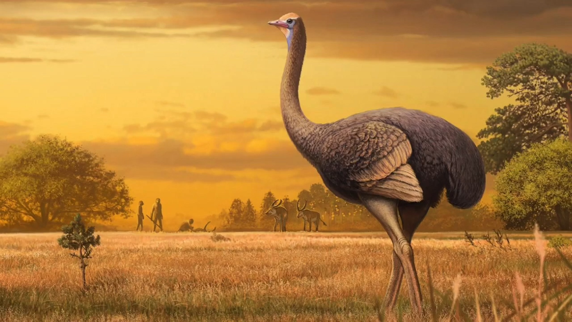 Europeans lived alongside giant bird