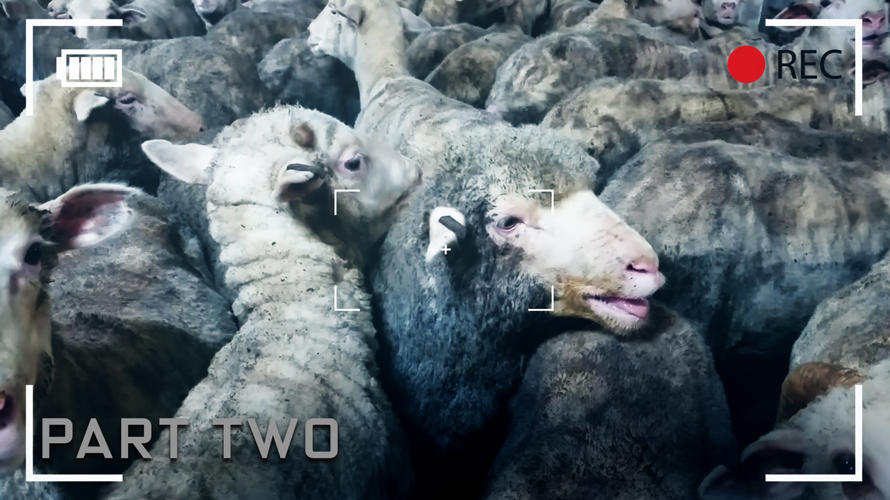 Sheep, ships and videotape - Part two