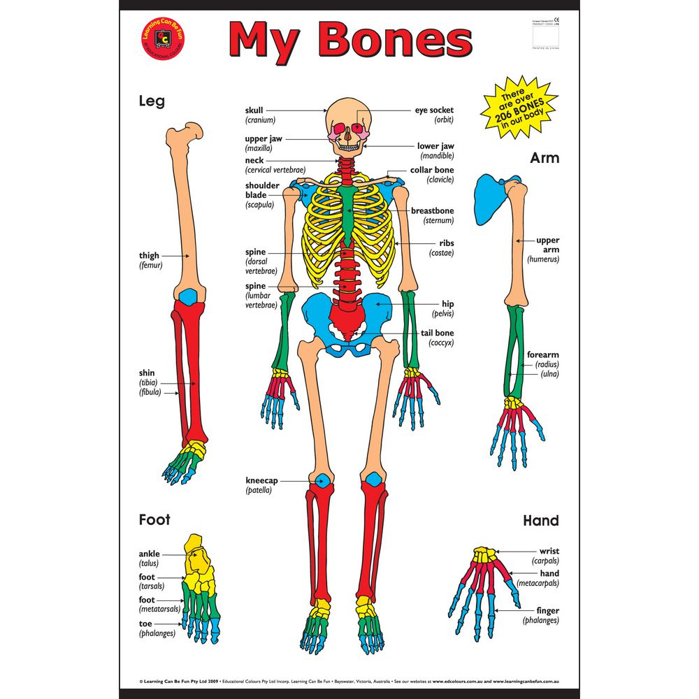 Learning Can Be Fun My Bones Chart | Officeworks