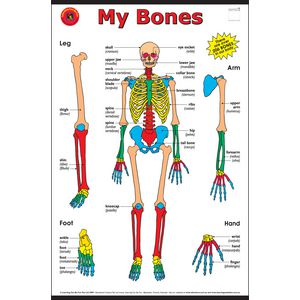 Learning Can Be Fun My Bones Chart