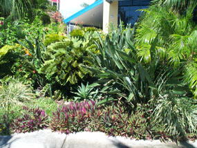Plan to plant horticultural garden design services for Garden designs brisbane