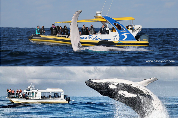 Waverider and Discovery 1 - whale watching in Port Macquarie, NSW