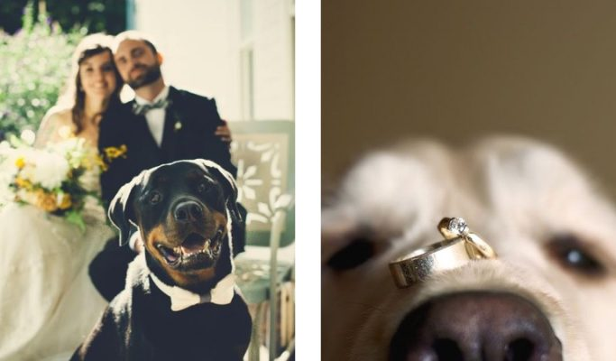wedding-pets-post-image-dogs