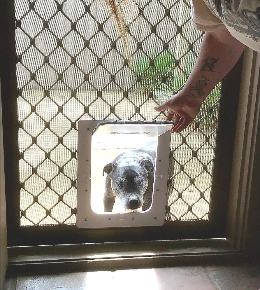 Aussie Pet Doors Doors