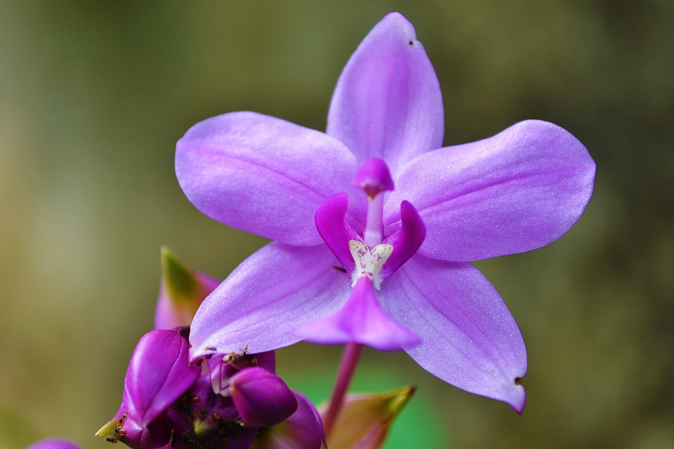 Photo of an orchid