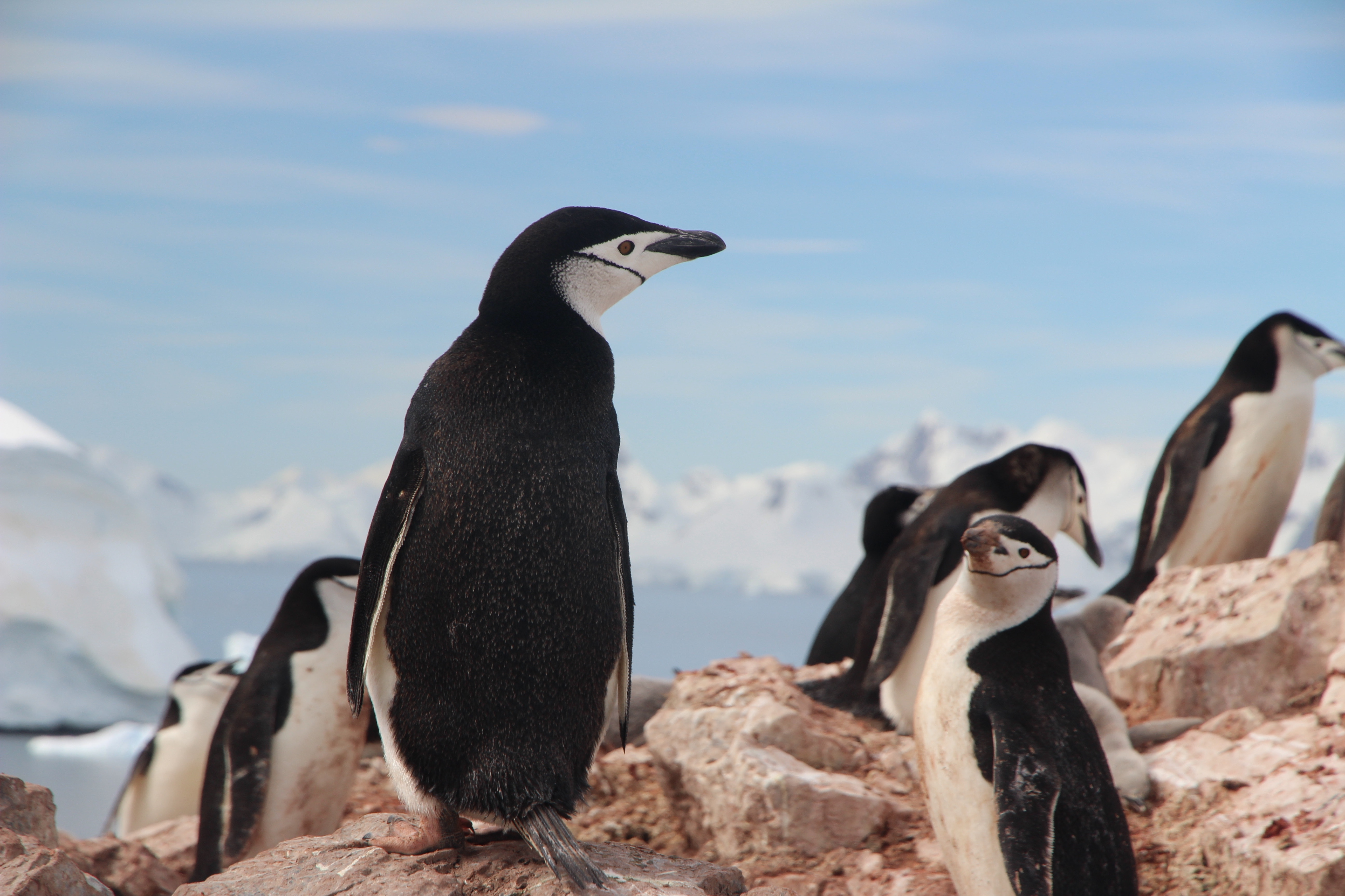 Penguins: They Exist and May Actually Help You PengWIN at Your Career