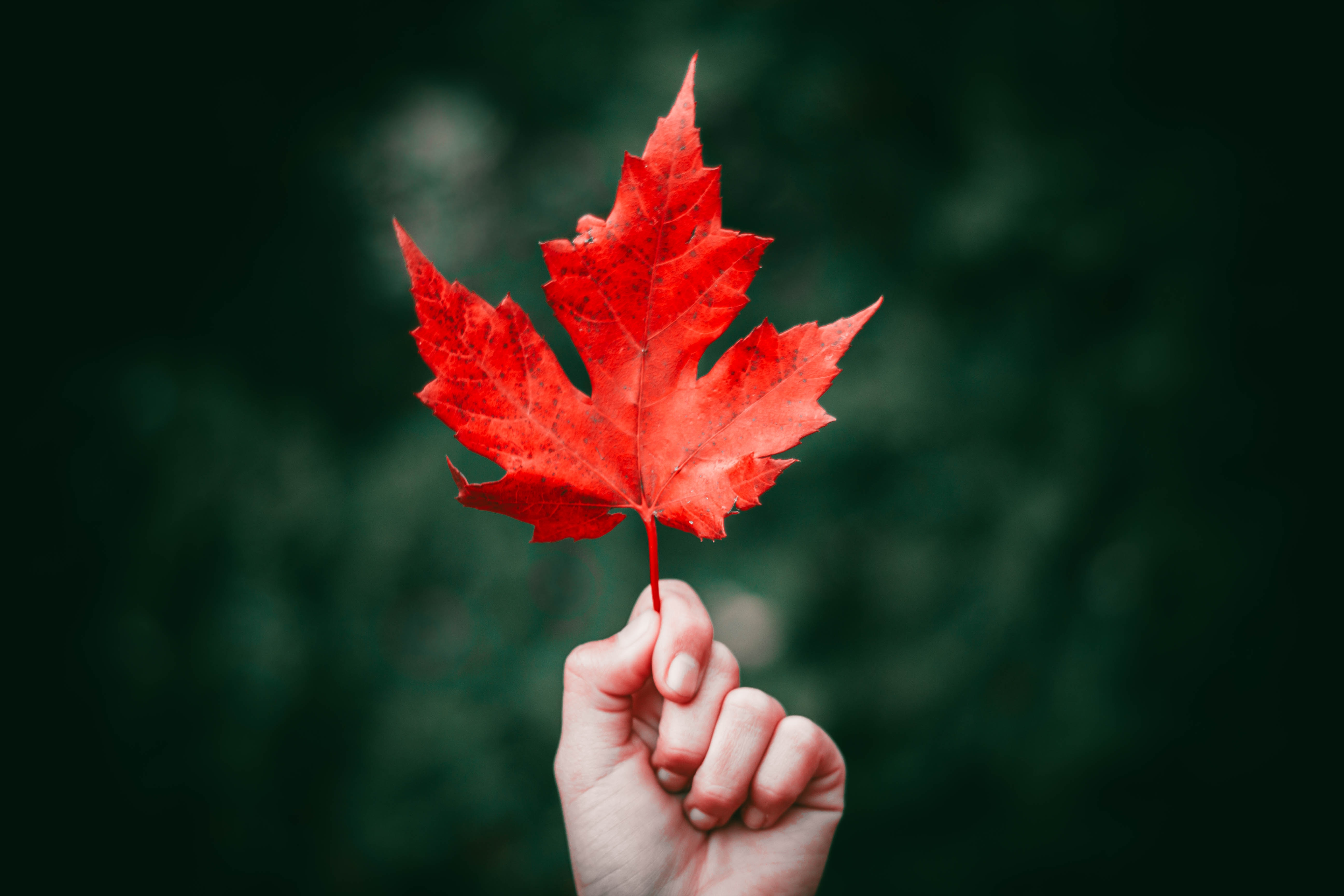 hand holding red leaf against green leafy background