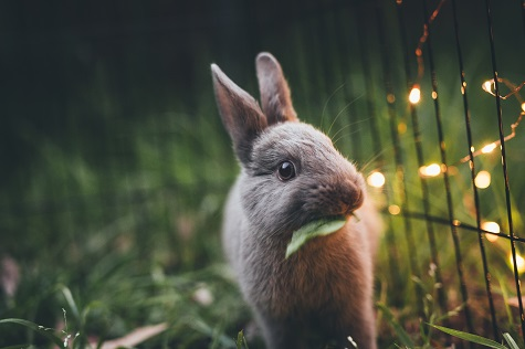 grey rabbit on grass next to fairy lights