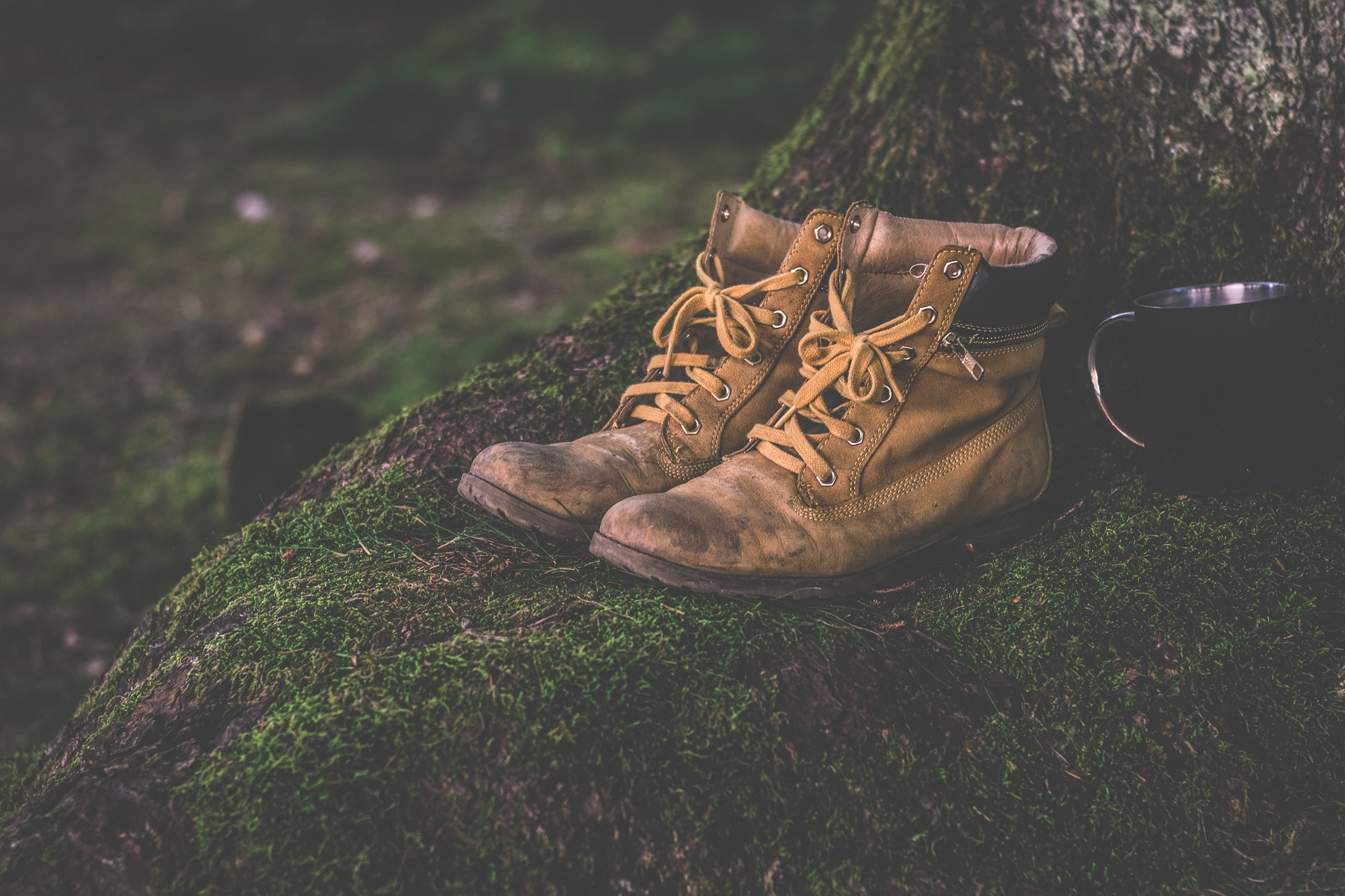 Hiking boots at the base of a mossy tree
