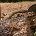 Climate crisis: deforestation at an all-time high