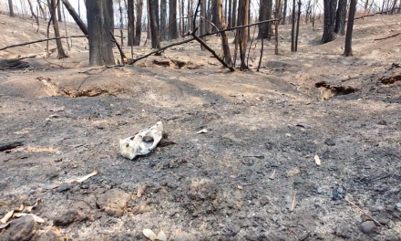 Bushfire Crisis: where nothing is left