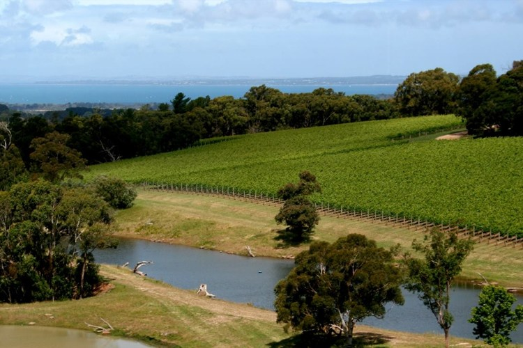 Image credit: Mornington Peninsula Wineries Facebook