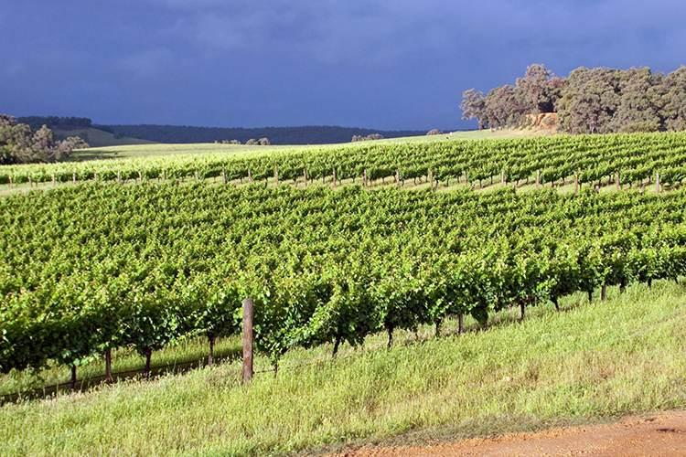 Image credit Geographe Winery Facebook