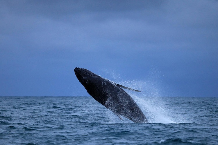 Image credit: Whale Centre
