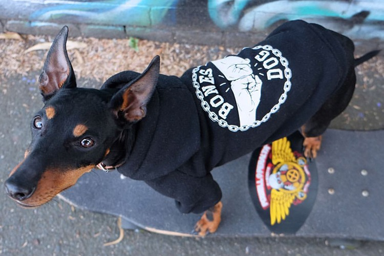 Dog-House-Dog-Apparel