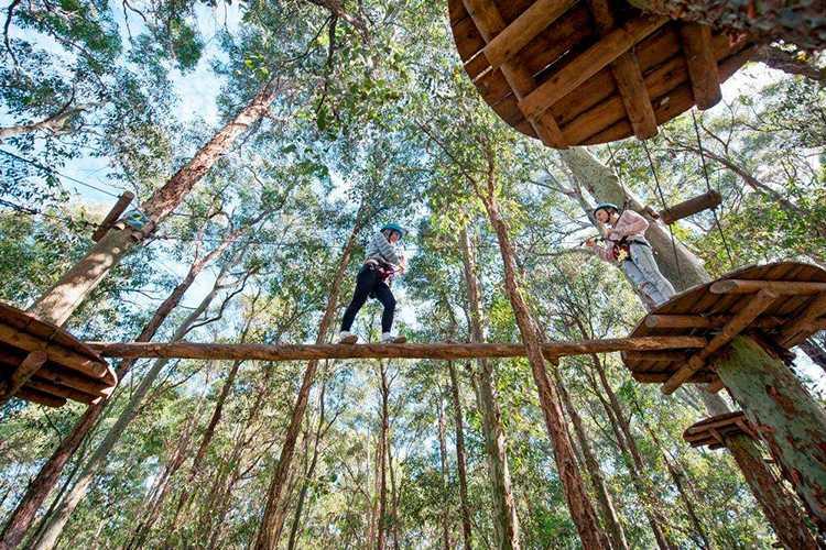 Image credit: Tree Top Adventure