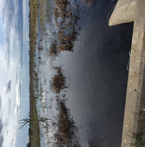 EnviroWater remaking the wetland image