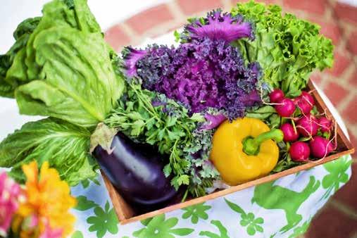 Kitchen Garden image