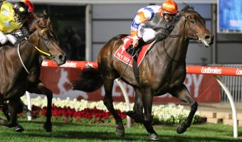 Dubai-Bound Hey Doc Resumes in 2018 Black Caviar Lightning