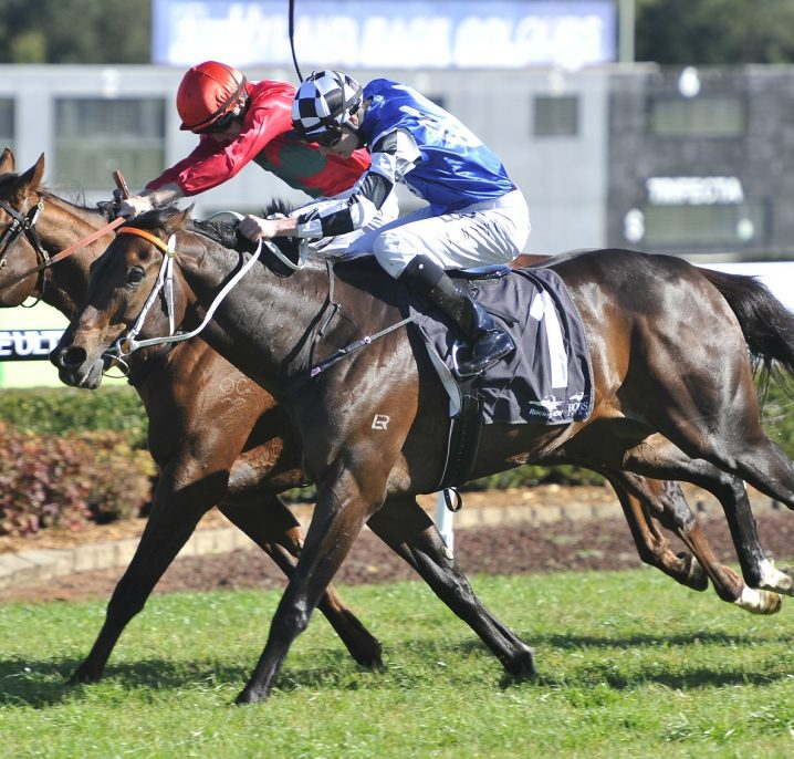 Gosford Cup 2018 Betting: Singing Firming Favourite