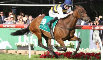 ATC Oaks 2018 Option for Aloisia